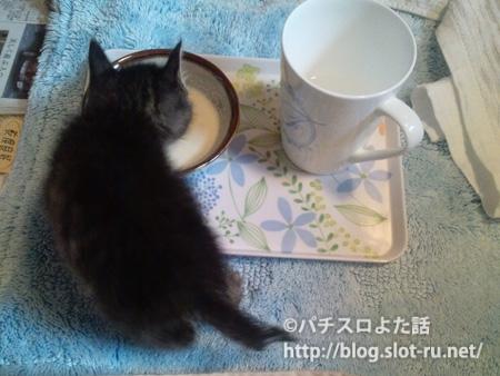 仔猫離乳食を食べるの図